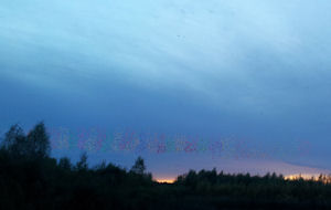 Counting Starlings.