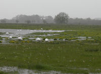 Flooded meadows