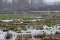 The marsh remains wet