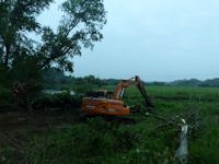 Clearing wind bown trees