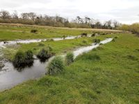 watermeadow laterals